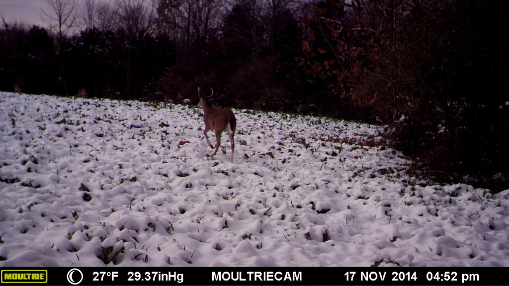 Tips for trail camera placement