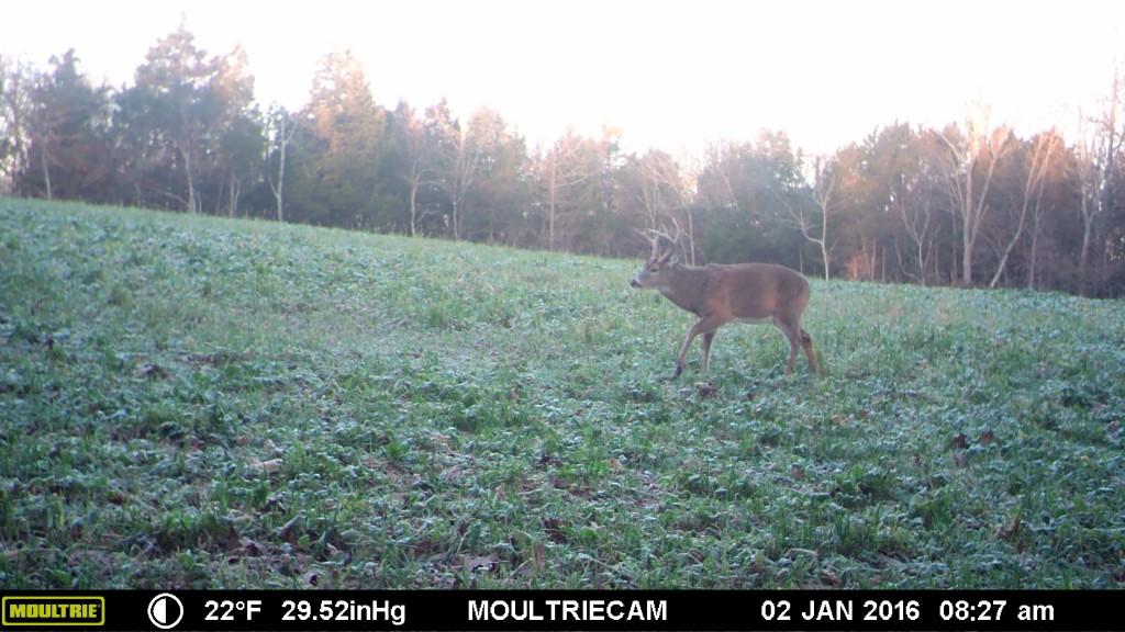 2016 buck outlook