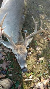 2016 illinois shotgun season 2