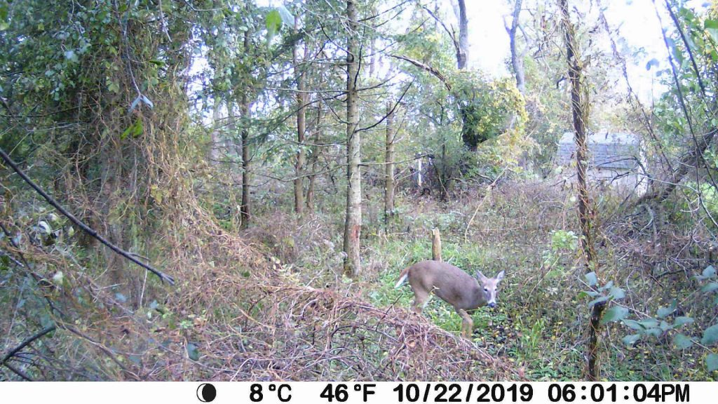 meidase trail camera review